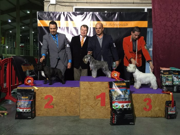 exposicion internacional de jerez domingo 2015