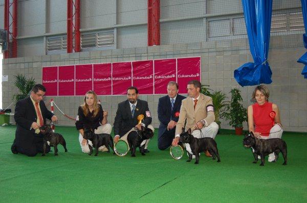 bulldog frances, expo gibraltar 2007, Geronimo excelente 1º